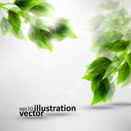 beautiful green leaves, eco background