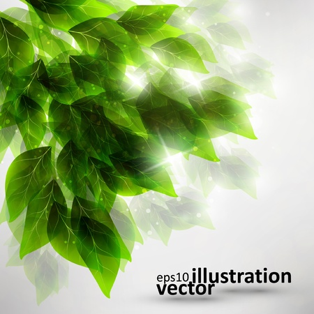 beautiful green leaves, eco background Vector