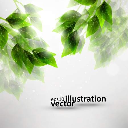 Beautiful green leaves, ecobackground  Vector