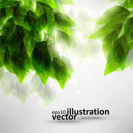 Beautiful green leaves, eco  background Stock Vector - 12723722