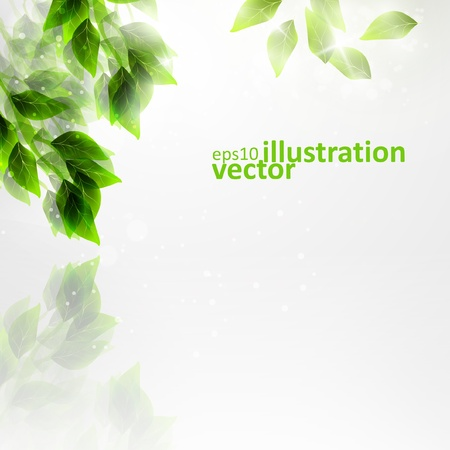 Beautiful green leaves, eco vector background