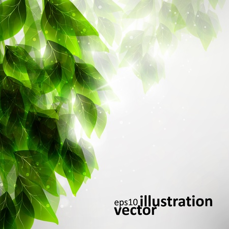 Beautiful green leaves, eco vector background  Illustration