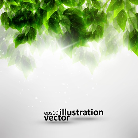 Beautiful green leaves eco background