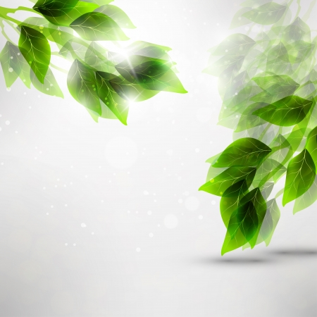 Beautiful green leaves, eco background Stock Photo