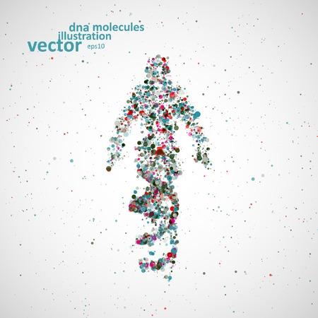 adn humano: Hombre modelo futurista de ADN, la molécula de resumen, ilustración de células Vectores
