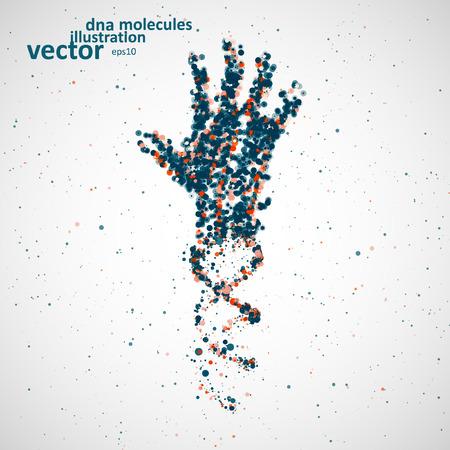corpo umano: Modello futuristico di dna mano, molecola astratta, cell illustrazione