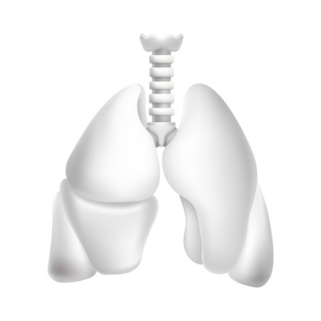 Human lungs. Illustration isolated on white background. Graphic concept for your design
