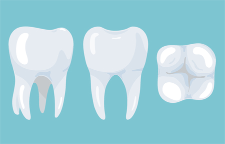 Tooth from different angles. Stomatology illustration for your design