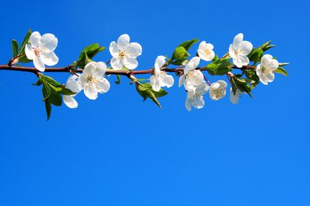 blooming branch-background with space for text or image Stock Photo - 4692542