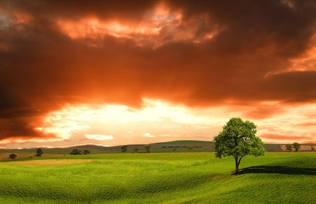 Sunset over farm field with lone tree Stock Photo - 6988081