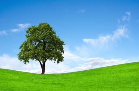 Perfect lone green tree against blue sky  Stock Photo - 6988097