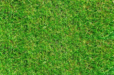 blades of grass: Fresh grass texture