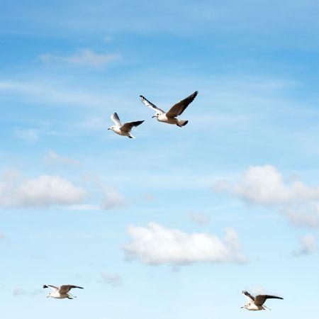 flying seagulls photo