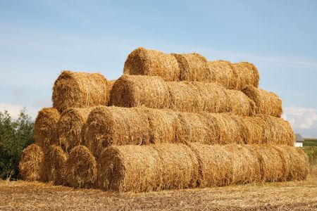 bale: Stack of hay bales