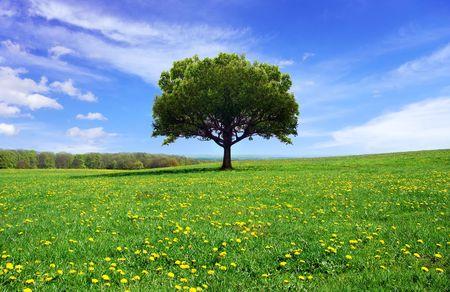 Schitterende lente landschap