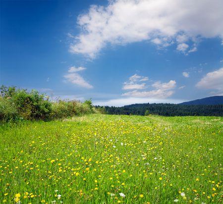 Spring landscape Stock Photo - 7908790