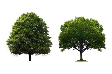 Trees isolated Stock Photo - 8001700