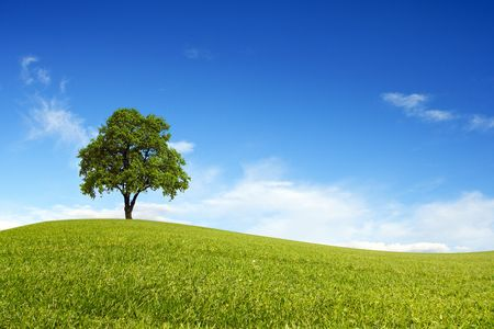 Spring field wit lone tree Stock Photo - 8001704