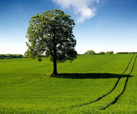 Springtime - green field with oak tree photo