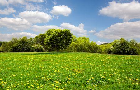 Beautiful spring meadow photo