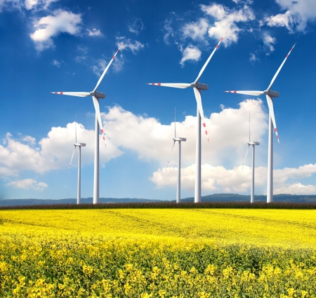 Wind generators with rapeseed field