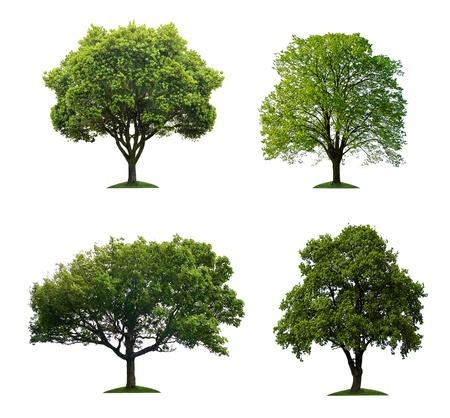 leafy trees: �rboles verdes aislados Foto de archivo