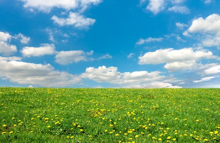 green spring meadow and sky photo