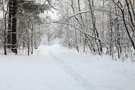 Winter alley Stock Photo - 8521132