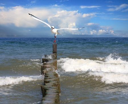 vol d oiseaux: Survolant Seagull mer Banque d'images