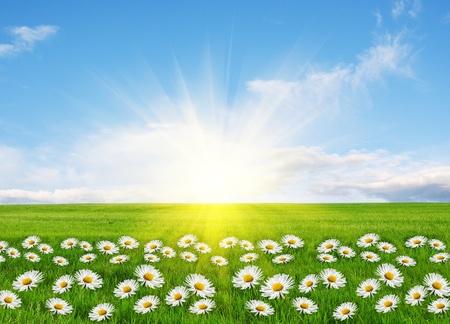 campo de margaritas: Primavera, imagen conceptual