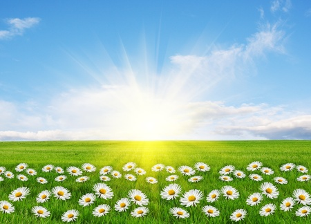 Springtime, conceptual image Stock Photo - 8733196