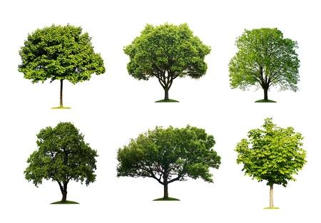 격리 된 여름 나무의 컬렉션 스톡 콘텐츠