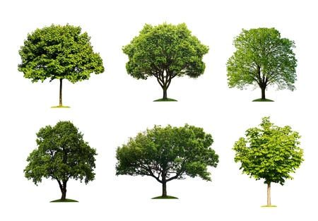 Collection of isolated summer tree