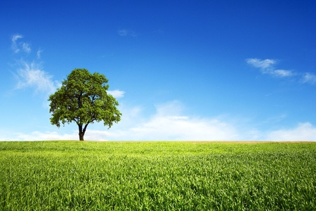 clearness: Field of wheat,tree and perfect blue sky Stock Photo
