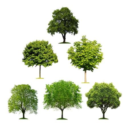 격리 된 나무의 컬렉션 스톡 콘텐츠