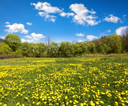 Beautiful spring landscape with trees  and meadow full of dandelions Stock Photo - 9553117