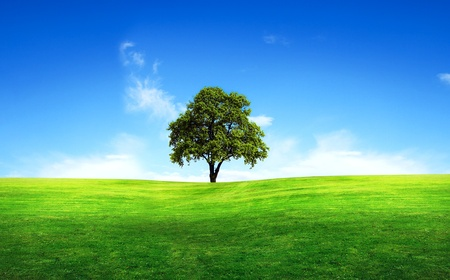 Green tree in a field Stock Photo - 9945792