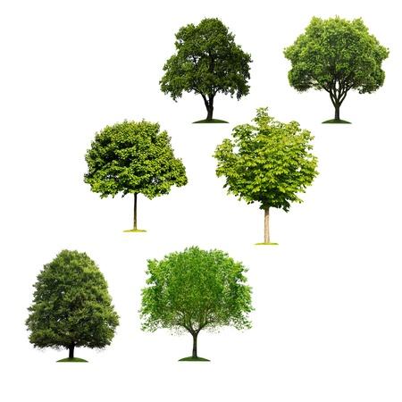 흰색 배경에 나무 스톡 콘텐츠
