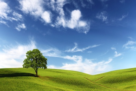 Field, tree and blue sky Stock Photo - 10588140