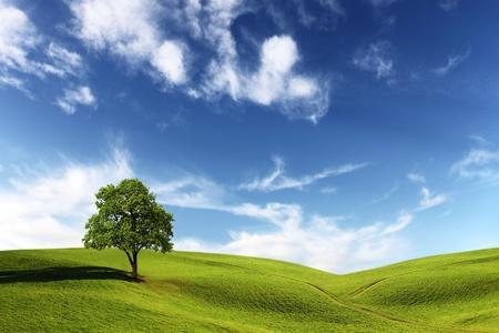 vacant: Field, tree and blue sky Stock Photo