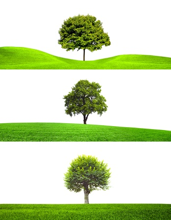 Trees collection Stock Photo - 10673402