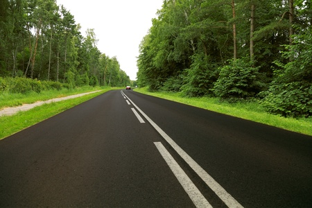 road in green forest photo