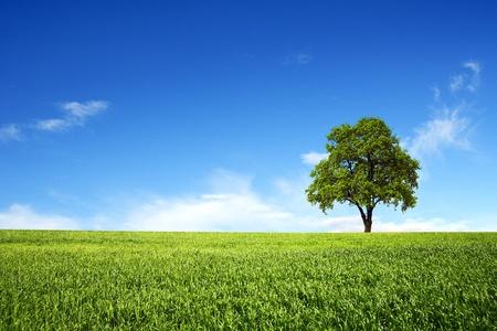 arboles frondosos: Campo de primavera con el único árbol Foto de archivo