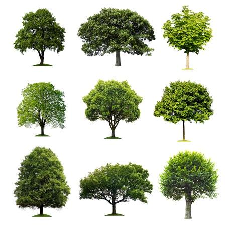 나무 collectio 스톡 콘텐츠