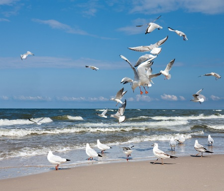 birds scenery: Group of Seagulls Stock Photo