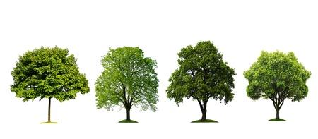 leafy trees: Colecci�n de �rboles frescas aisladas sobre fondo blanco