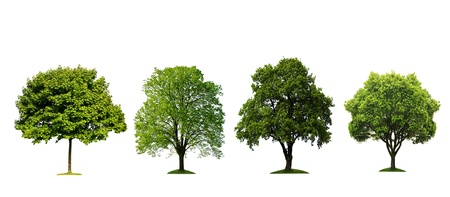 Fresh tree collection isolated on white background photo
