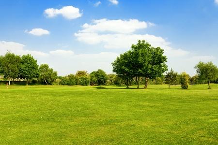 field: Green grass on a golf field