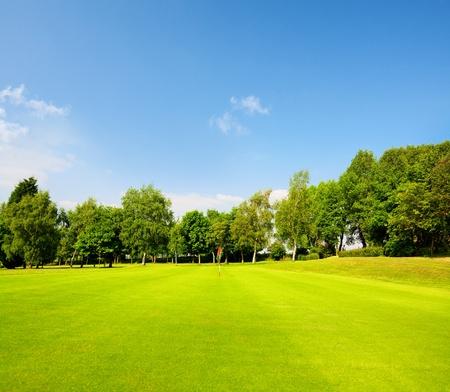 fairway: Green grass on a golf field