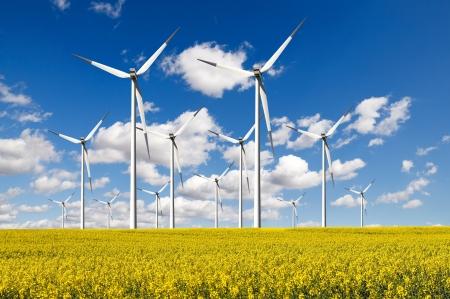 Windturbines fattoria con campo di colza